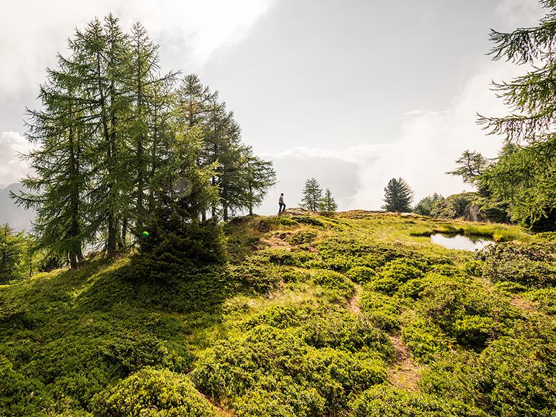 Biodiversität – Lebensraum für Birkwild