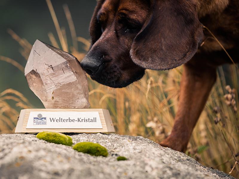 Welterbe-Kristall für das Projekt «Natur- und Kulturlandschaft Natischerberg»