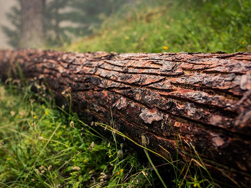 Schutzmassnahmen – Kampf gegen Borkenkäfer
